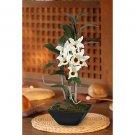 Dendrobium Pendulum w/Classic Black Vase (White Red)