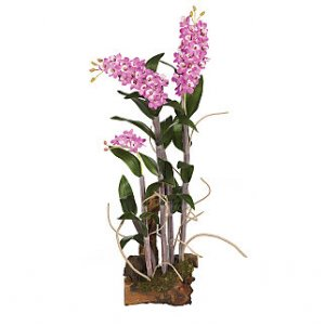 Dendrobium w/Root Base Silk Orchid Arrangement