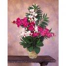 Double Phal/Dendrobium Silk Orchid Arrangement (Beauty White)