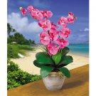 Double Stem Phalaenopsis Silk Flower Arrangement (Dark Pink)