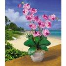 Double Stem Phalaenopsis Silk Flower Arrangement (Mauve)