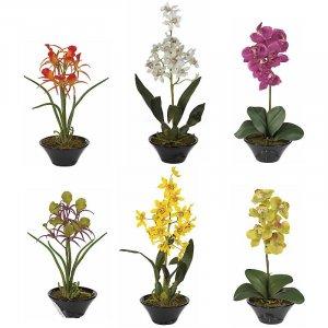 Orchid w/Black Bowl Assortment (Set of 6)