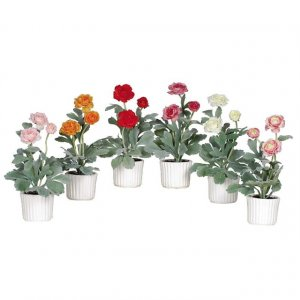 Ranunculus w/White Vase (Set of 6)