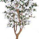 Dogwood Silk Tree 5 ft