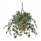 Holland Ivy Hanging Basket Silk Plant