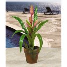 Potted Sword Bromeliad - Mauve