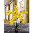 Phalaenopsis Liquid Illusion -  Yellow
