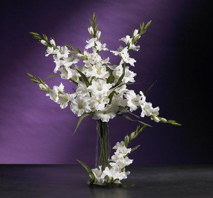 """36"""" Gladiola Stem (Set of 12) - White"""