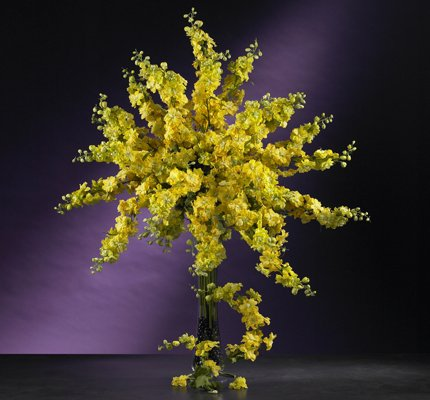 "38.5"" Delphinium Stem (Set of 12) - Yellow"