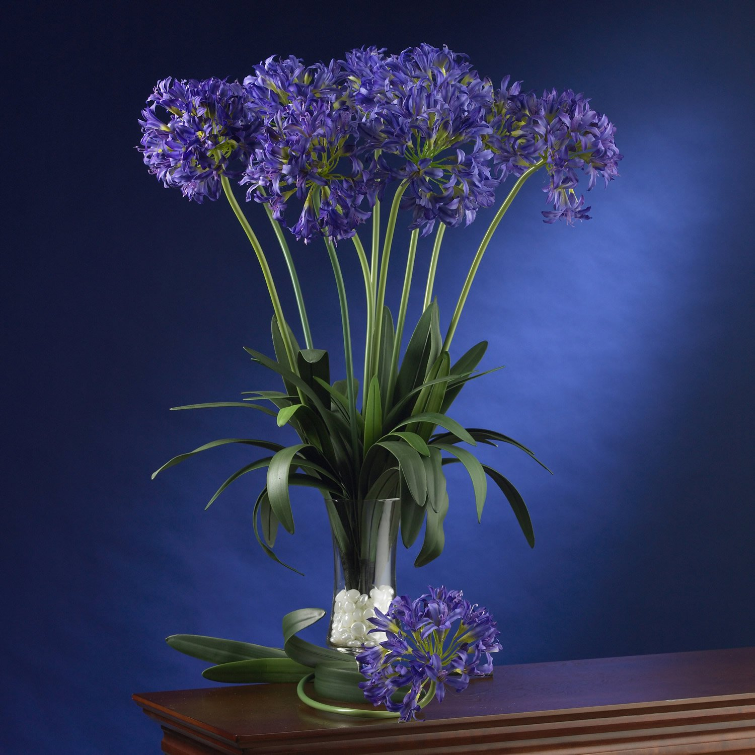 """29"""" African Lily Stem (Set of 12) - Purple"""