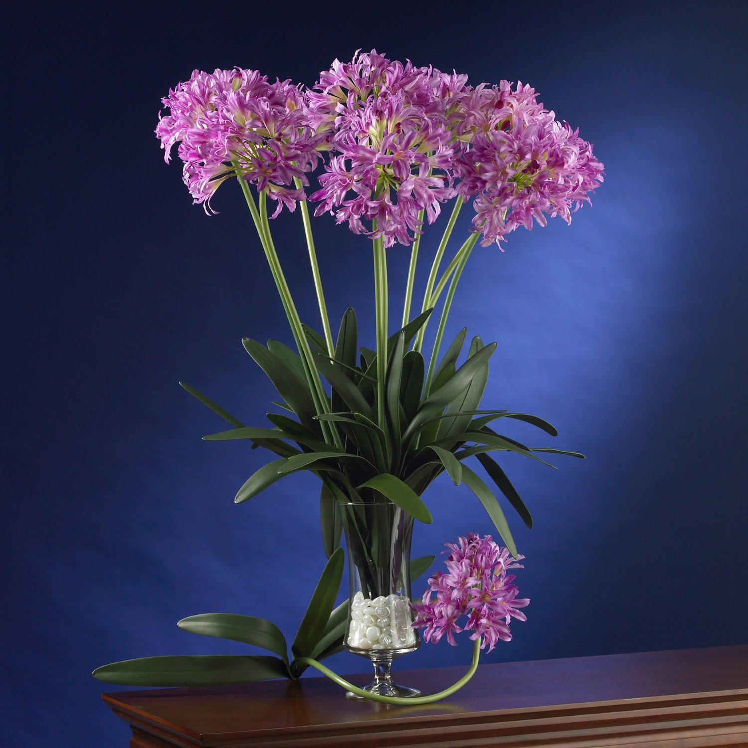 """29"""" African Lily Stem (Set of 12) - Pink"""
