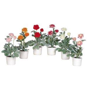 Ranunculus w/White Vase (Set of 6)