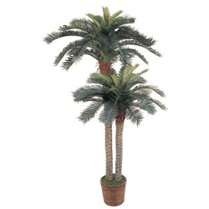 6' and 4' Double Potted Sago Palm Silk Tree
