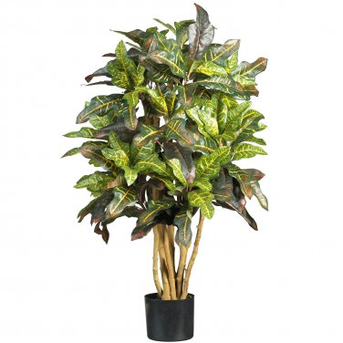 3' Croton Silk Tree