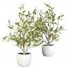 "18"" Olive Tree w/Vase (Set of 2)"