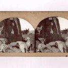 Stereoview Langenheim 370 Frith Egypt Nubia Pylon and Alabaster Colossi Karnak