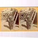 Stereoview Wheeler Expedition 1873 #20 O'Sullivan War Chief Zuni Indian Pueblo