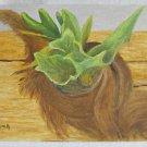 Folk Naive Vintage Painting Tropical Botany Still Life Coconut Plant Husk Long