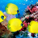 Yellow Fish Ocean Underwater Nature 16x12 Print Poster