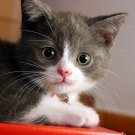 Cute Kitten Small Cat Animal 24x18 Print Poster