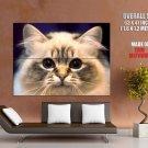 Big Eyes Kitty Cat Animal Huge Giant Print Poster
