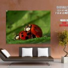 Ladybirds Sex Funny Insects Macro Animal Nature GIANT 63x47 Print Poster