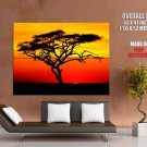 Acacia Tree Sunset Africa Huge Giant Print Poster