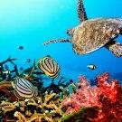 Underwater Nature Ocean Turtle 16x12 Print Poster