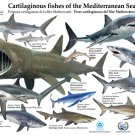 Sharks Marine Biology Educational Science 16x12 Print Poster