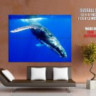 Whale Underwater Sea Nature Animals Huge Giant Print Poster