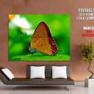 Beautiful Butterfly Macro Nature Animals Huge Giant Print Poster