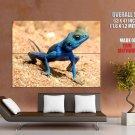 Blue Lizard Macro Sand Nature Animals Huge Giant Print Poster