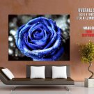Beautiful Blue Rose Dew Macro Flower Art Huge Giant Print Poster