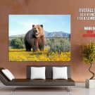 Grizzly Bear Animal Nature Mountains GIANT 63x47 Print Poster