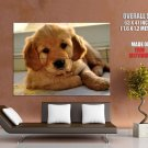 Labrador Retriever Puppy Dogs Huge Giant Print Poster