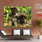German Shepherd Puppies Dogs Huge Giant Print Poster