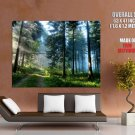 Great Pine Forest Light Nature Huge Giant Print Poster
