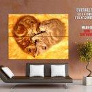 Love Heart Sleeping Cats Animal Huge Giant Print Poster