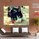 Cherry Cat Green Eyes Animal Huge Giant Print Poster