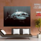 Warrior Shark Scars Animal Huge Giant Print Poster