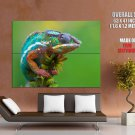 Chameleon Colorful Lizard Animal Huge Giant Print Poster