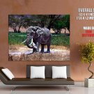 African Elephant Animal National Geographic HUGE GIANT Print Poster