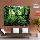 Jungle Rainforest Liana Nature HUGE GIANT Print Poster