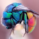 Colorful Fly Macro Insect Animal Pearl Huge 47x35 Print Poster