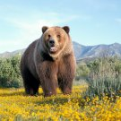 Grizzly Bear Animal Nature Mountains Huge 47x35 Print Poster
