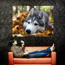 Autumn Leafs Thoughtful Siberian Husky Huge 47x35 Print POSTER