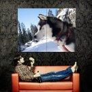Siberian Husky Snow Dog Animal Huge 47x35 Print Poster