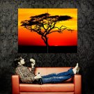 Acacia Tree Sunset Africa Huge 47x35 Print Poster