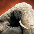Body Art Elephant Hand Fingers Cool 32x24 Print POSTER