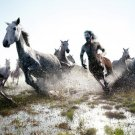 Centaur Horses Steeds Cool 32x24 Print POSTER